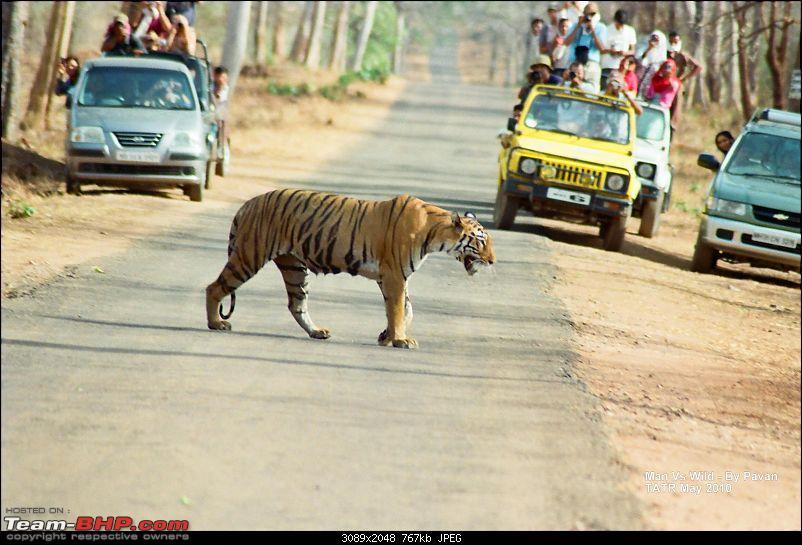 A visit to the Sher khan's den- Tadoba Andhari tiger reserve.-03840024.jpg