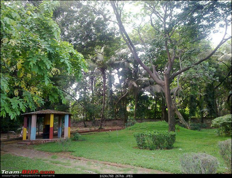 Story of a Barbeque Summer : Kuch Khatta Kuch Meetha.-08-greenary-everywhere-ii.jpg.jpg