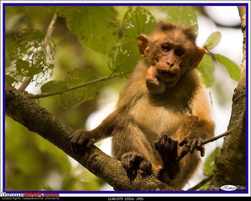 Life in Jungles of Kabini - June 2010-kabini-10-june-2010_0136.jpg