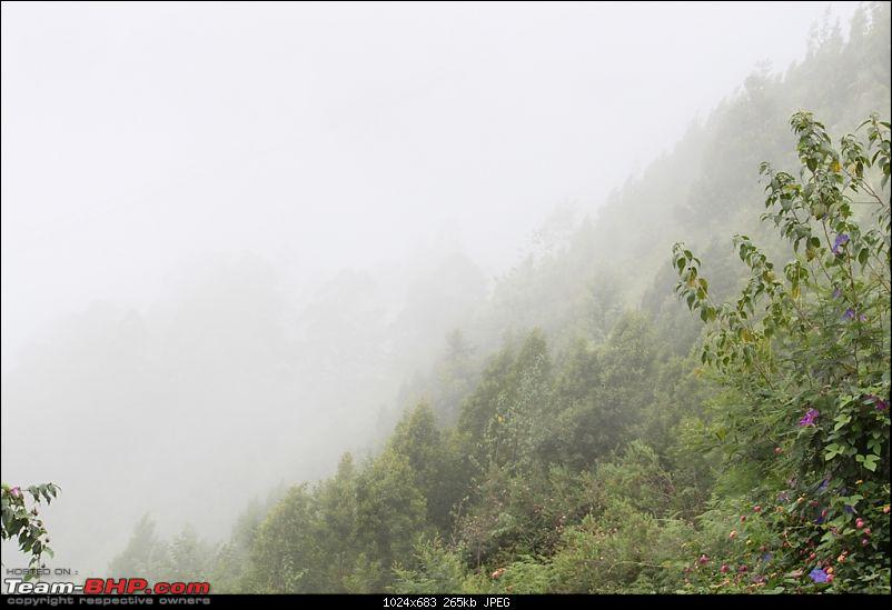 """The Gift of the Forest"" -Land of misty afternoons- kodai-img_0269.jpg"