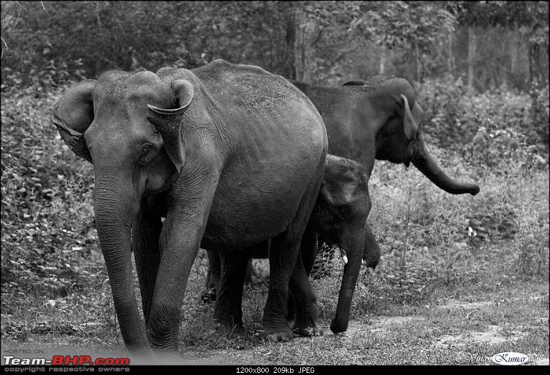 Life in Jungles of Kabini - June 2010-kabini-10-june-2010_0322.jpg