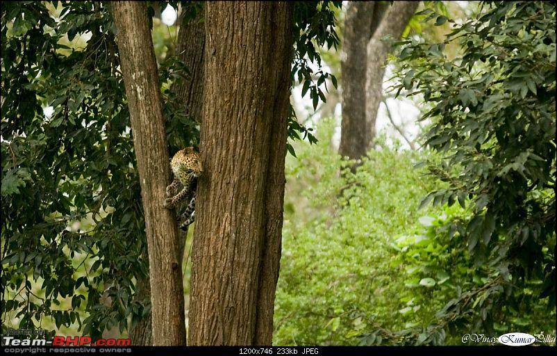 Life in Jungles of Kabini - June 2010-kabini-10-june-2010_0588.jpg