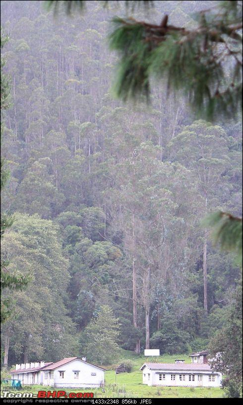 """The Gift of the Forest"" -Land of misty afternoons- kodai-img_1203.jpg"