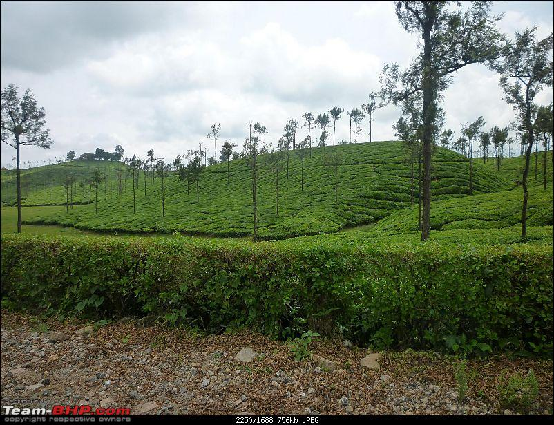 A trip out of Real estate to TEA ESTATE - Our Valparai vacation-39.jpg