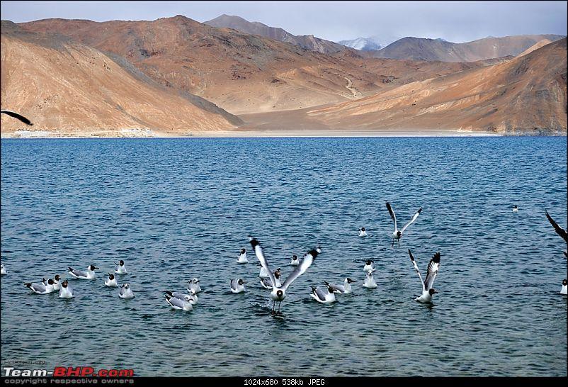 rkbharat's photolog for Leh 2010-pdsc_2921.jpg