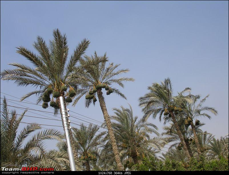 My Egypt Days : Photologue-dsc09928.jpg