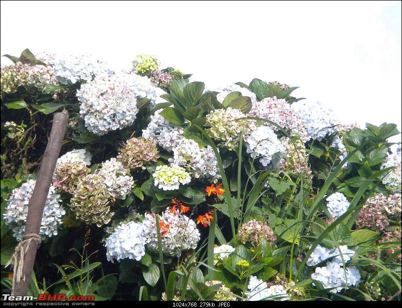 vMid-Year Monsoon Retreat ...Kodaikanal - Queen of the hills !!-flower.garden.pillar.rocks..jpg