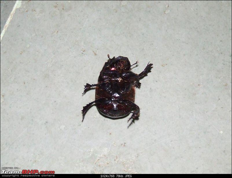 Bandipur - Mudumalai Trip from Chennai-beetle-size-my-palm-large.jpg