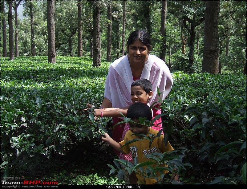 Bandipur - Mudumalai Trip from Chennai-tea-estates-gudalur-large.jpg