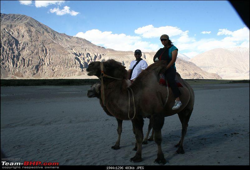 Bangalore to Sakleshpur via LADAKH!!!-us-camels.jpg