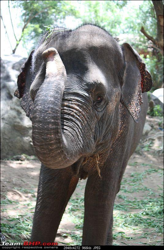 Nature and Wildlife-elephant.jpg