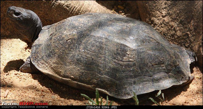 Nature and Wildlife-turtle2.jpg