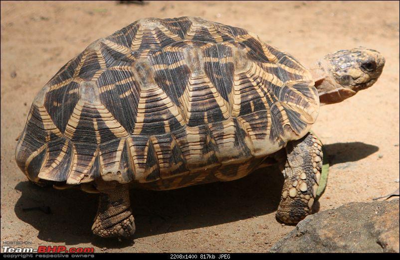 Nature and Wildlife-turtle.jpg