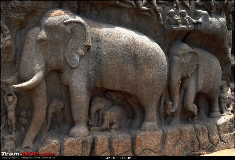 Civic & City : Celebrating the Friendship Day Mahabalipuram - Tranquebar - Velankanni-elephant-family.jpg
