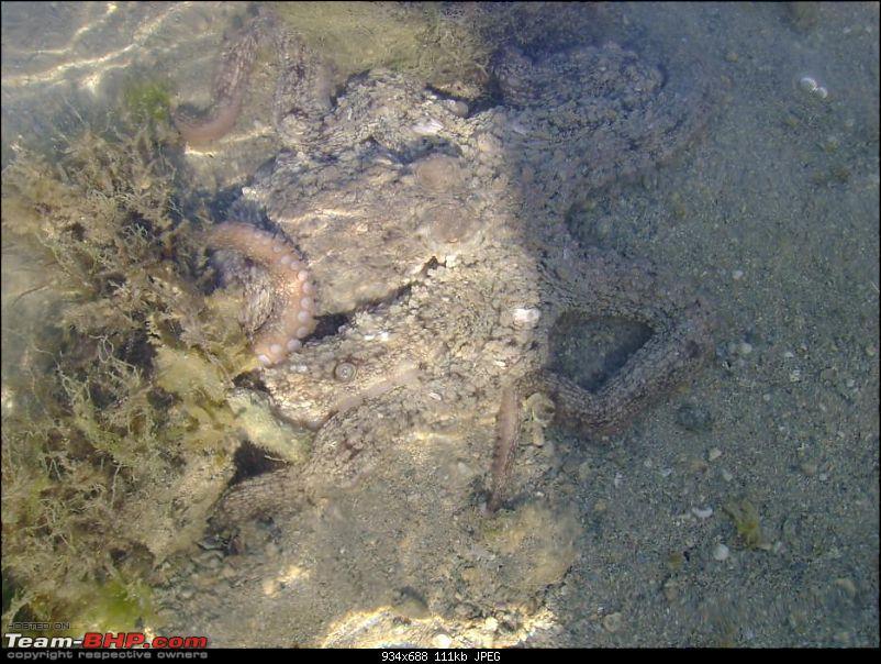 A Reef Full Of Life-5320.jpg