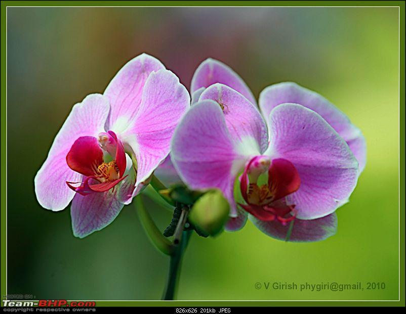 Lalbaugh Flower Show: A Small Photologue-flower03.jpg