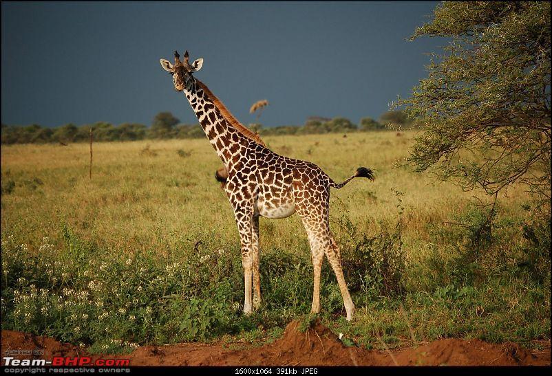 Africa - Endless Plains-315.jpg