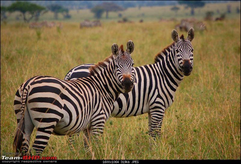 Africa - Endless Plains-260.jpg