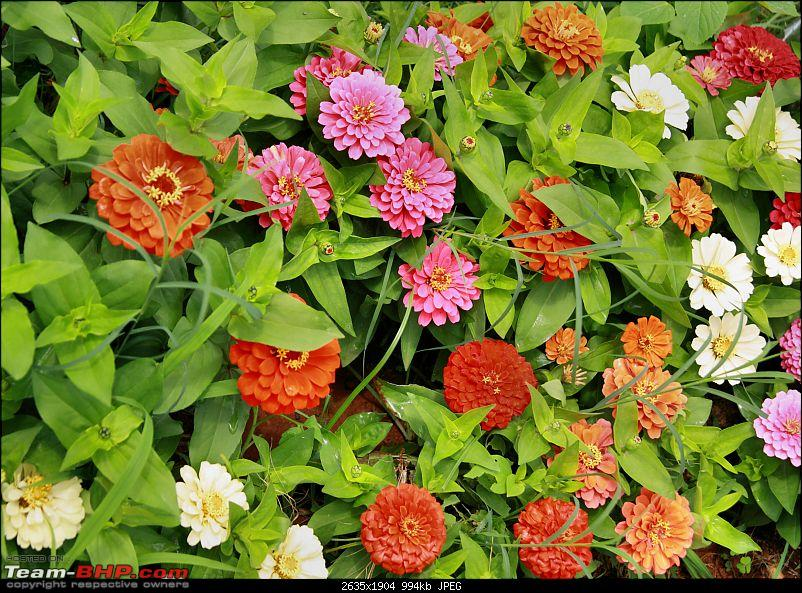 Lalbaugh Flower Show: A Small Photologue-bed-flowers.jpg