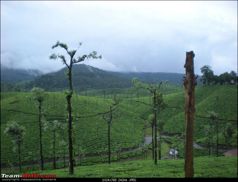 Valparai -> Famed route -> Kochi: Monsoon magic from ghats to beaches-tea-estates-5.jpg