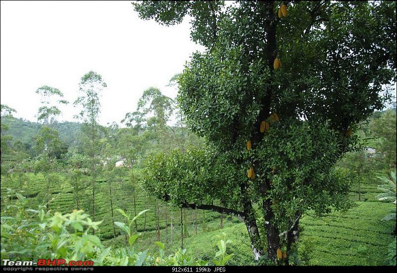 Valparai -> Famed route -> Kochi: Monsoon magic from ghats to beaches-jackfruit.jpg