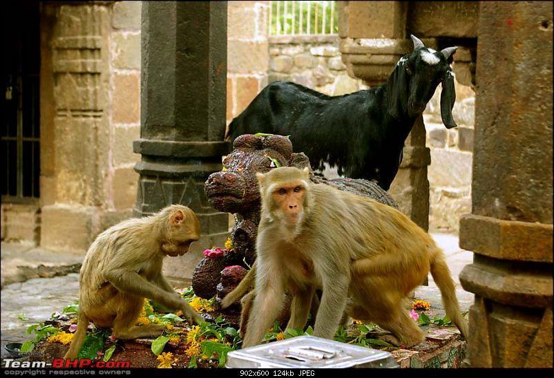 Went in search of Shiva - Found him blocking my way-pilgrims-2.jpg