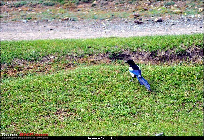 4500 km, Two Idiots & a Wild Safari in Ladakh-093_a-bird.jpg