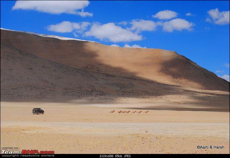 4500 km, Two Idiots & a Wild Safari in Ladakh-198_chasing-kiyang-tso-kar.jpg