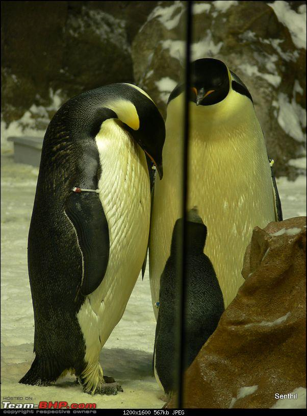 A Whirlwind tour of some parts of the USA-penguins.jpg