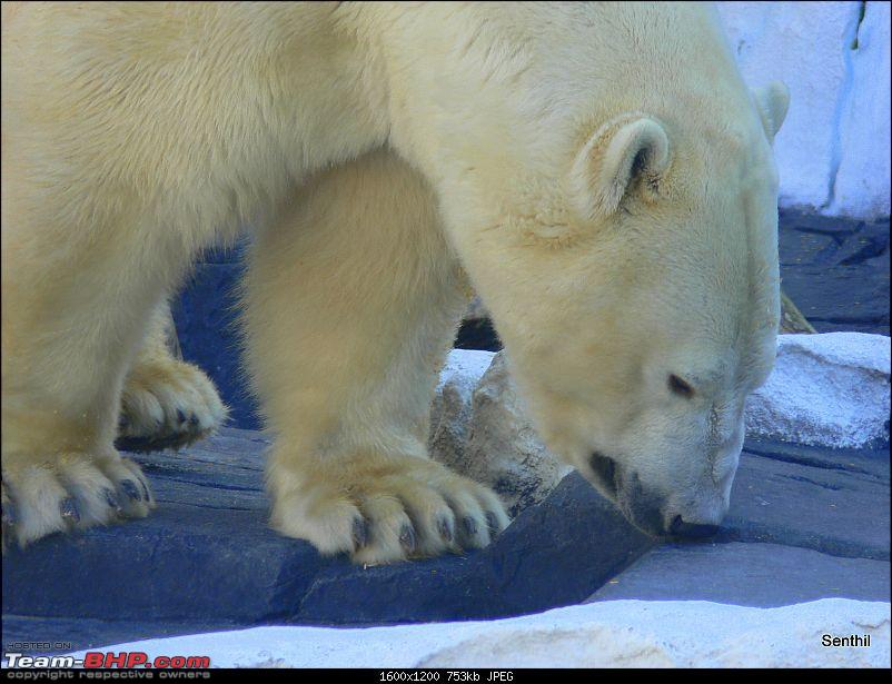 A Whirlwind tour of some parts of the USA-polar-bear.jpg