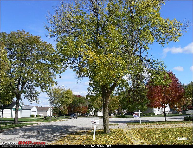 A Whirlwind tour of some parts of the USA-1-fall-setting-.jpg