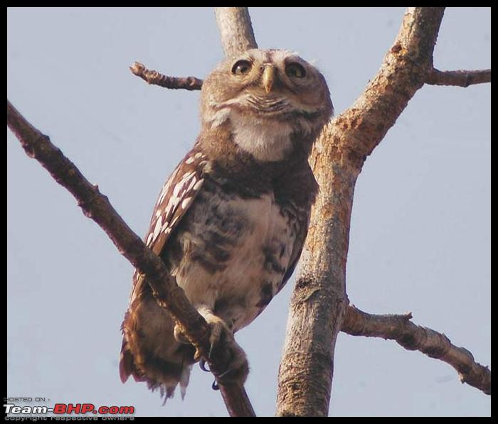 Name:  owlet_forest_01.jpg