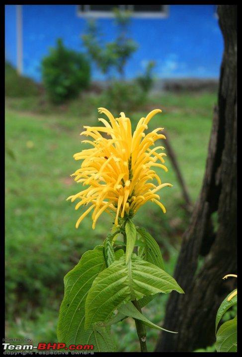 Name:  flower.jpg Views: 796 Size:  57.1 KB