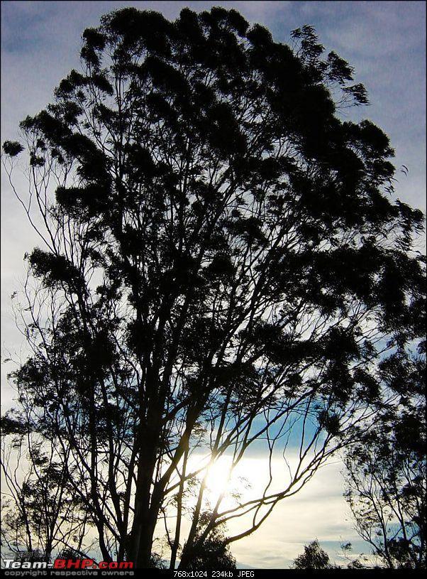 On Bullets - Devarayanadurga-tree2.jpg