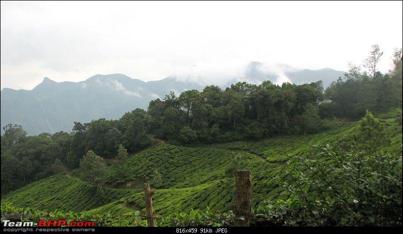 Munnar! The heaven on this earth. A lover's paradise-img_1279.jpg