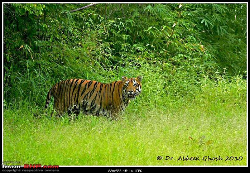 Nobody can assure you a Tiger, and thats the fun of it - Team BHP meet at Tadoba !-img_8188.jpg