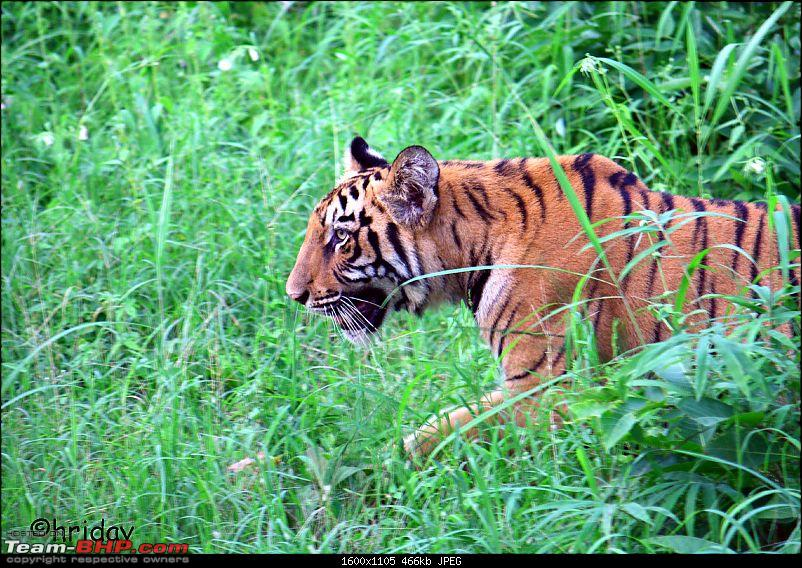 Nobody can assure you a Tiger, and thats the fun of it - Team BHP meet at Tadoba !-_mg_4913.jpg
