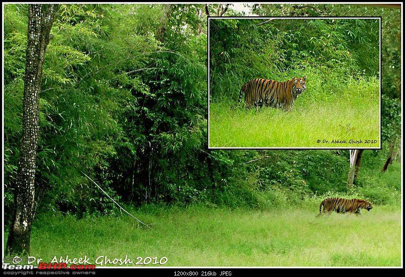 Nobody can assure you a Tiger, and thats the fun of it - Team BHP meet at Tadoba !-untitled1.jpg