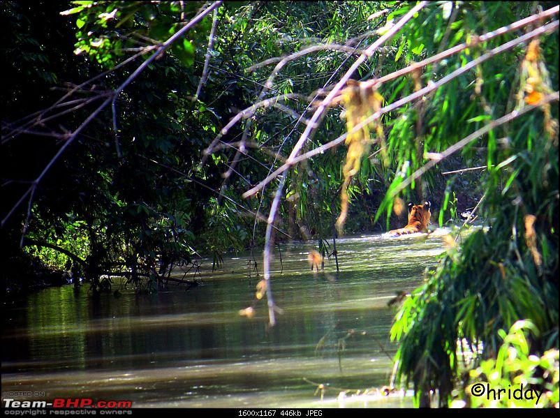 Nobody can assure you a Tiger, and thats the fun of it - Team BHP meet at Tadoba !-circuit-water.jpg