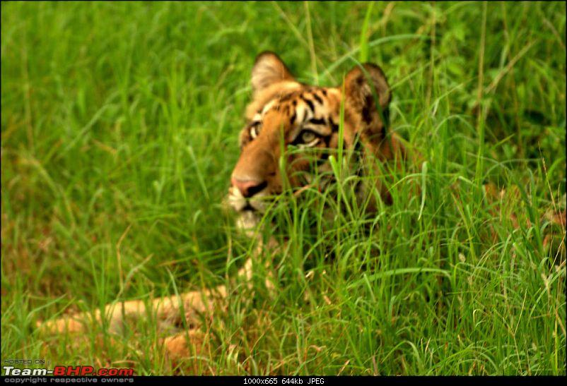 Nobody can assure you a Tiger, and thats the fun of it - Team BHP meet at Tadoba !-thinker.jpg