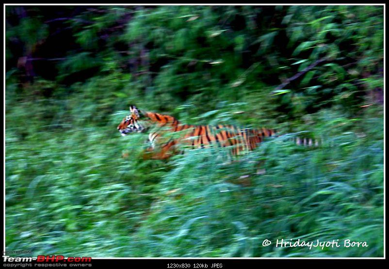 Nobody can assure you a Tiger, and thats the fun of it - Team BHP meet at Tadoba !-flying-through-air-copy.jpg