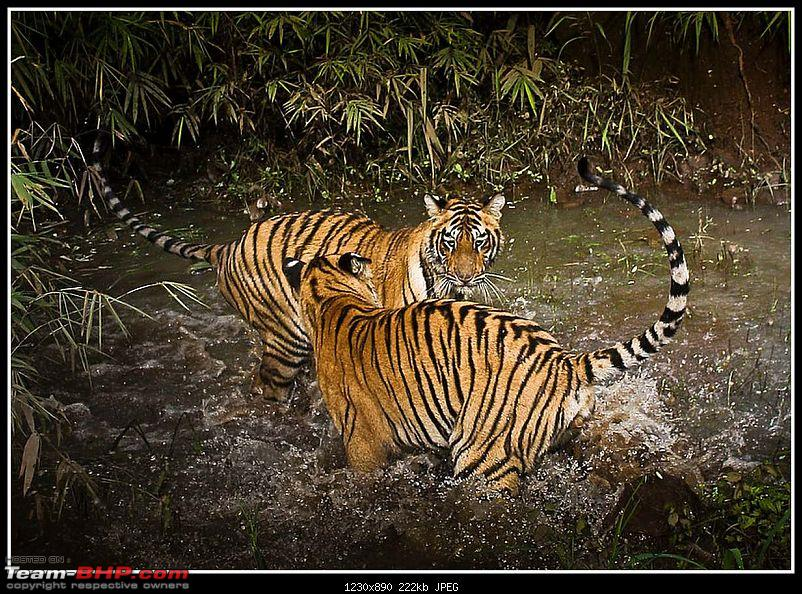 Nobody can assure you a Tiger, and thats the fun of it - Team BHP meet at Tadoba !-18551.jpg