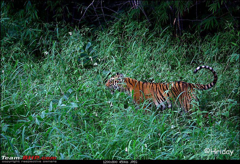 Nobody can assure you a Tiger, and thats the fun of it - Team BHP meet at Tadoba !-before-jump.jpg