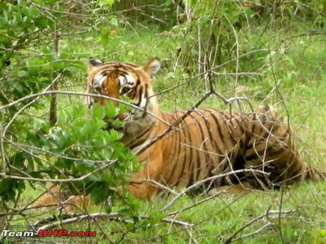 Name:  BAndipur26sep2010 060 Small.jpg Views: 9101 Size:  80.9 KB