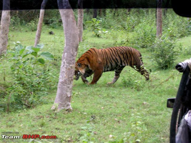 Name:  BAndipur26sep2010 035 Small.jpg Views: 15123 Size:  70.3 KB