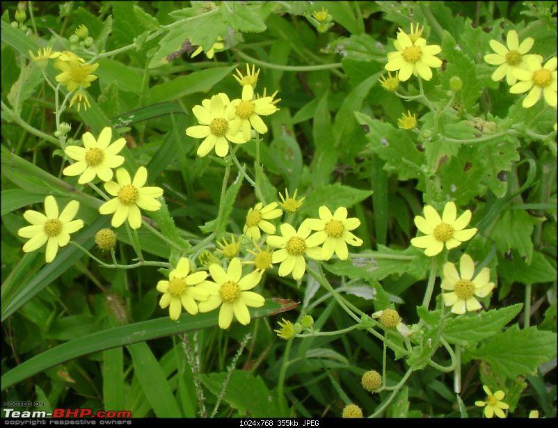 Flower Power : Celebrating nature, the mini KAASmiri way-first-view-flowers.jpg