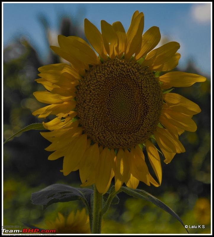Name:  DSC_8509RAW.jpg Views: 1698 Size:  299.6 KB