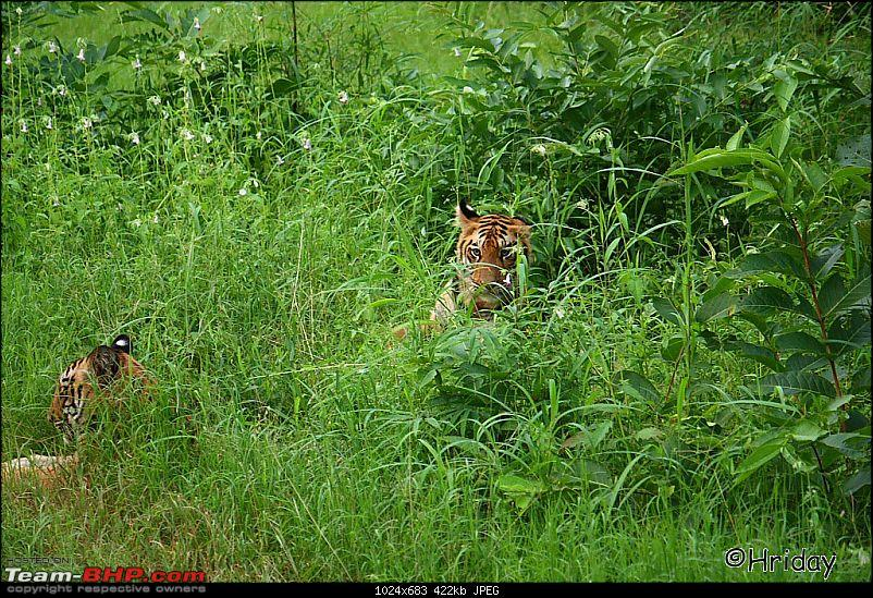 Nobody can assure you a Tiger, and thats the fun of it - Team BHP meet at Tadoba !-_mg_4984.jpg