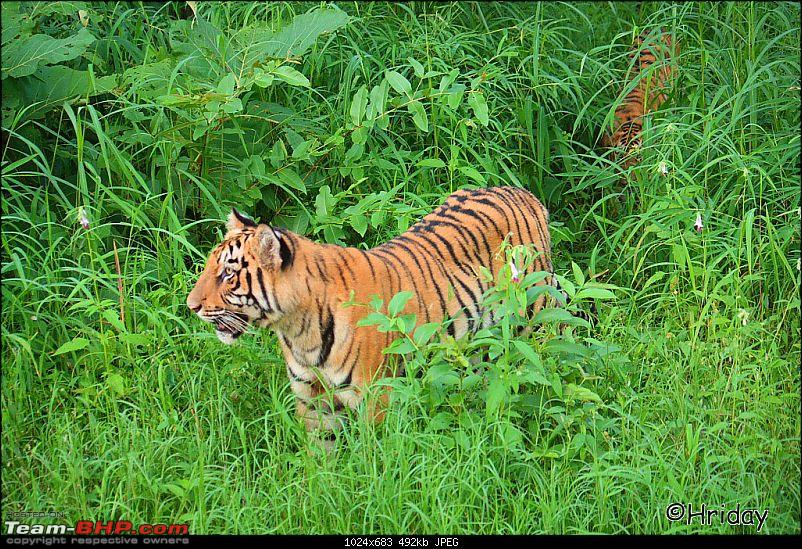 Nobody can assure you a Tiger, and thats the fun of it - Team BHP meet at Tadoba !-_mg_5000.jpg