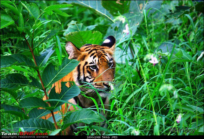 Nobody can assure you a Tiger, and thats the fun of it - Team BHP meet at Tadoba !-_mg_4964.jpg